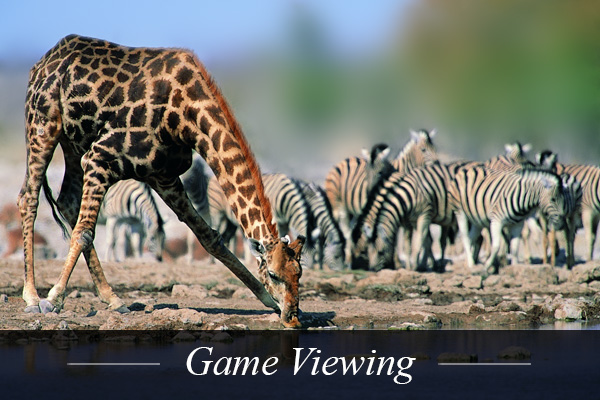 Game Viewing near Swanlake Luxury Accommodation at Magersfontein Memorial Golf Estate near Kimberley in Northern Cape